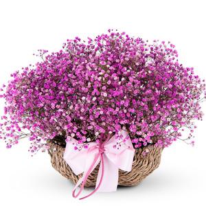 안개바구니(예약만가능(핑크)